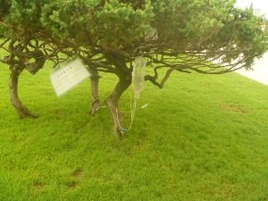 Random: We found a tree with an IV drip.